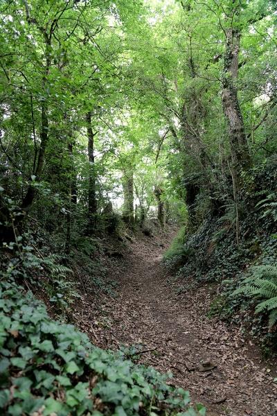 Chemin creux de la Roche Pépin à Montaigu