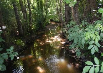 <p>Les petits ruisseaux font les grandes rivières ! Des travaux prévus sur le Longuenais et le Grand Ry.</p>