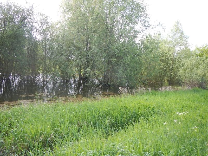 Les frayères à brochet à Mortagne-sur-Sèvre