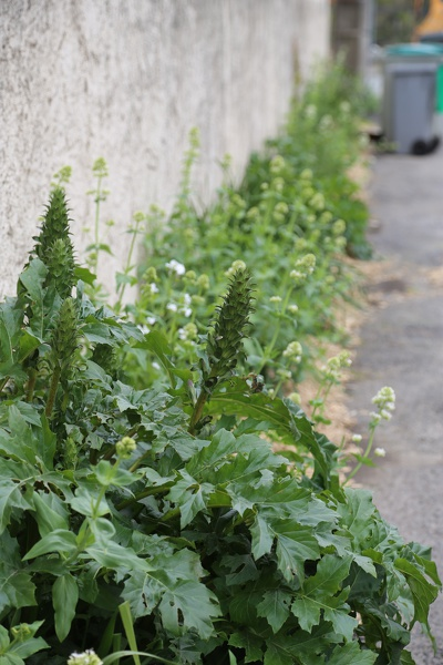 Fleurissement pieds de murs