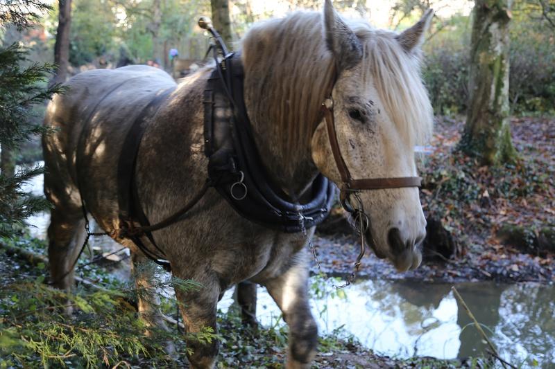 Débardage à cheval